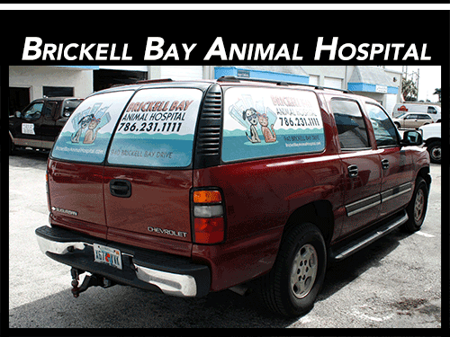 Rear Window Vehicle Graphics Perforated Window Vinyl - Graphics for car windows